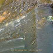 Fotowalk Schwarzbach Okriftel - Fotograf Christoph Fuhrmann