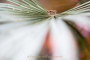 Fotowalk Palmengarten - Fotograf Joachim Clemens