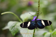 Fotowalk Schmetterlingspark Schloss Sayn - Fotograf Christoph Fuhrmann