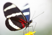 Fotowalk Schmetterlingspark Schloss Sayn - Fotograf Thomas Stähler