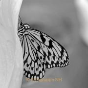 Fotowalk Schmetterlingspark Schloss Sayn - Fotografin Anne Jeuk