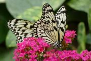 Fotowalk Schmetterlingspark Schloss Sayn - Fotografin Bettina Jäger