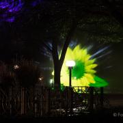 2015 Winterlichter im Palmengarten - Fotografin Jutta R. Buchwald