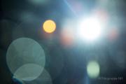 2015 Winterlichter im Palmengarten - Fotografin Nicole Gieseler