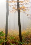 Herbst - Fotograf Henry Mann