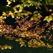 Herbst - Fotograf Michael Häckl