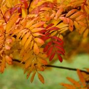 Herbst - Fotografin Jutta R. Buchwald