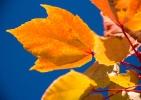 Herbst - Fotografin Nicole Gieseler