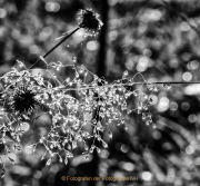Bokeh - Fotografin Jutta R. Buchwald