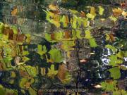 Monatsthema Natur abstrakt - Fotografin Anne Jeuk