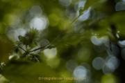 Monatsthema Natur abstrakt - Fotografin Jutta R. Buchwald