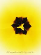 Monatsthema Natur abstrakt - Fotografin Nicole Gieseler