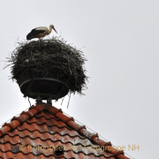 Monatsthema Froschperspektive - Fotograf Albert Wenz