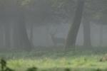Nebel - Fotograf Clemens Schnitzler