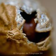 Monatsthema 'In der Küche' - Fotografin Anne Jeuk