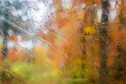 Monatsthema Spiel mit Glas und Wasser - Fotografin Izabela Reich