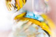 Monatsthema Spiel mit Glas und Wasser - Fotografin Jutta R. Buchwald