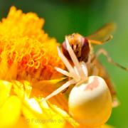 Monatsthema Gelb dominiert - Fotograf Albert Wenz