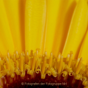 Monatsthema Gelb dominiert - Fotografin Anne Jeuk