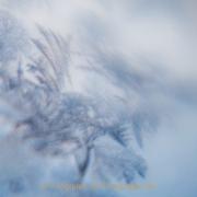 Monatsthema Eis - Fotografin Jutta R. Buchwald