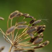 Monatsthema Gräser / Ähren - Fotografin Anne Jeuk