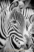 Monatsthema Tiere - Fotograf Joachim Clemens