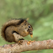 Monatsthema Tiere - Fotograf Olaf Kratge
