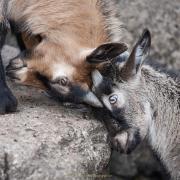 Monatsthema Tiere - Fotograf Thomas Stähler