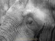 Monatsthema Tiere - Fotograf Henry Mann