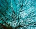 Monatsthema Abstrakt - Fotograf Henry Mann