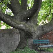 Bäume - Fotograf Albert Wenz
