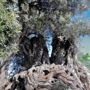 Bäume - Fotograf Horst Zeich