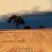 Bäume - Fotograf Joachim Clemens
