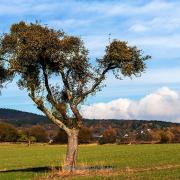 Bäume - Fotografin Jutta R. Buchwald