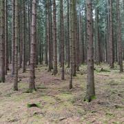 Bäume - Fotograf Olaf Kratge