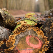Bäume - Fotograf Clemens Schnitzler