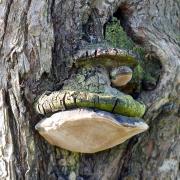 Bäume - Fotograf Henry Mann