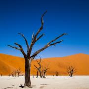 Bäume - Fotograf Michael Schwarz