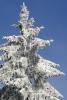 Bäume - Fotograf Helmut Joa