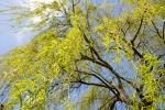 Bäume - Fotografin Nicole Gieseler