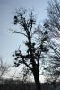 Bäume - Fotograf Joachim Würth