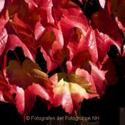 Monatsthema Rot dominiert - Fotograf Helmut Joa