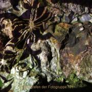 Monatsthema Langzeitbelichtung - Fotograf Helmut Joa