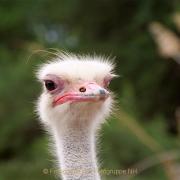 Monatsthema Tiere - Fotografin Anne Jeuk