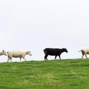 Monatsthema Tiere - Fotografin Jutta R. Buchwald