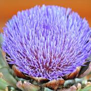 Monatsthema Blüten - Fotograf Albert Wenz