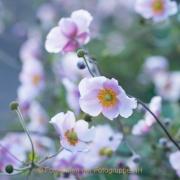Monatsthema Blüten - Fotograf Olaf Kratge