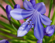 Monatsthema Blüten - Fotograf Henry Mann