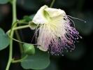 Monatsthema Blüten - Fotografin Anne Jeuk