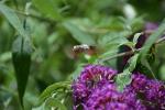 Monatsthema Blüten - Fotograf Christoph Fuhrmann